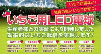 アスター株式会社LED電球いちご栽培-チラシデザイン